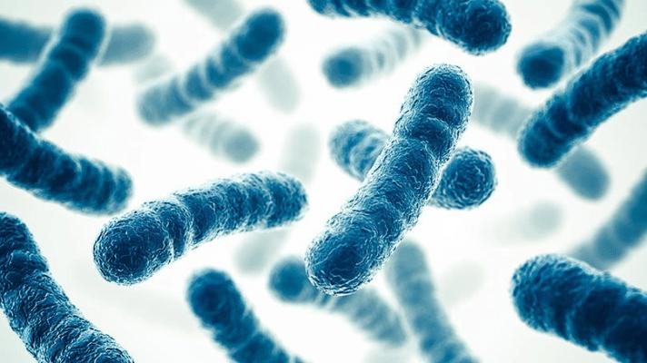 probióticos